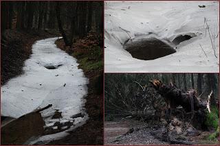 Ellecom bevroren rivier bos winter