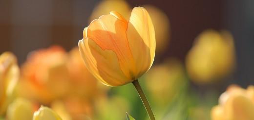 yellow de kleur van