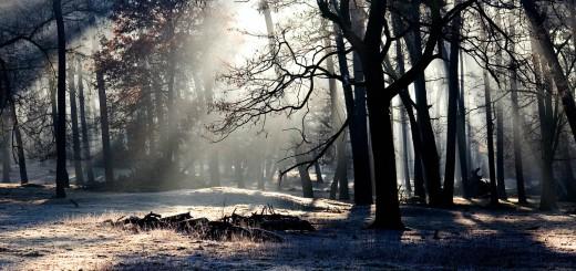 winters landschap waarin vergankelijkheid op een mooie manier zichtbaar is