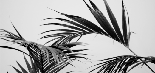 Flourish like a Palm Tree, Groeien als een palm